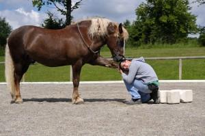 Dominanz oder Freundschaft - wie wir mit unseren Pferden umgehen muss jeder für sich selbst entscheiden