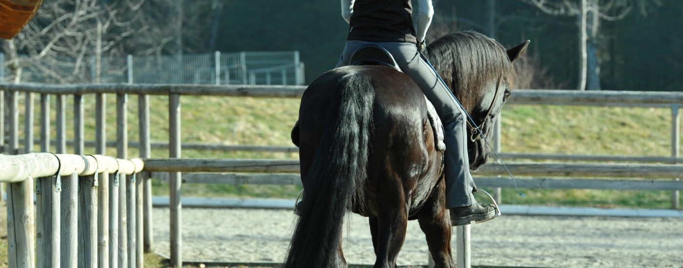 Schulterherein auf drei Spuren korrekt geritten