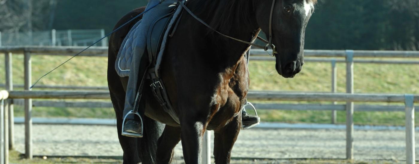 Schulterherein von vorne: Durch die Kameraperspektive schient das Pferd auf vier Hufspuren zu treten, würde man genau von vorne schauen, könnte man sehen, dass es sich um ein Schulterherein auf drei Spuren handelt.