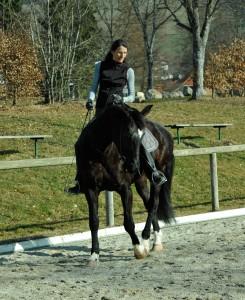 Bei diesem (absichtlich!) falsch gerittenen Schulterherein, werden Kopf und Hals mit dem Zügel nach innen gezogen, das Pferd verbiegt sich dadurch nur im Hals.