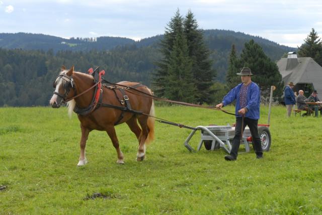 Zugleistungsprüfung für Schwarzwälder Fuchs Stuten in St. Märgen