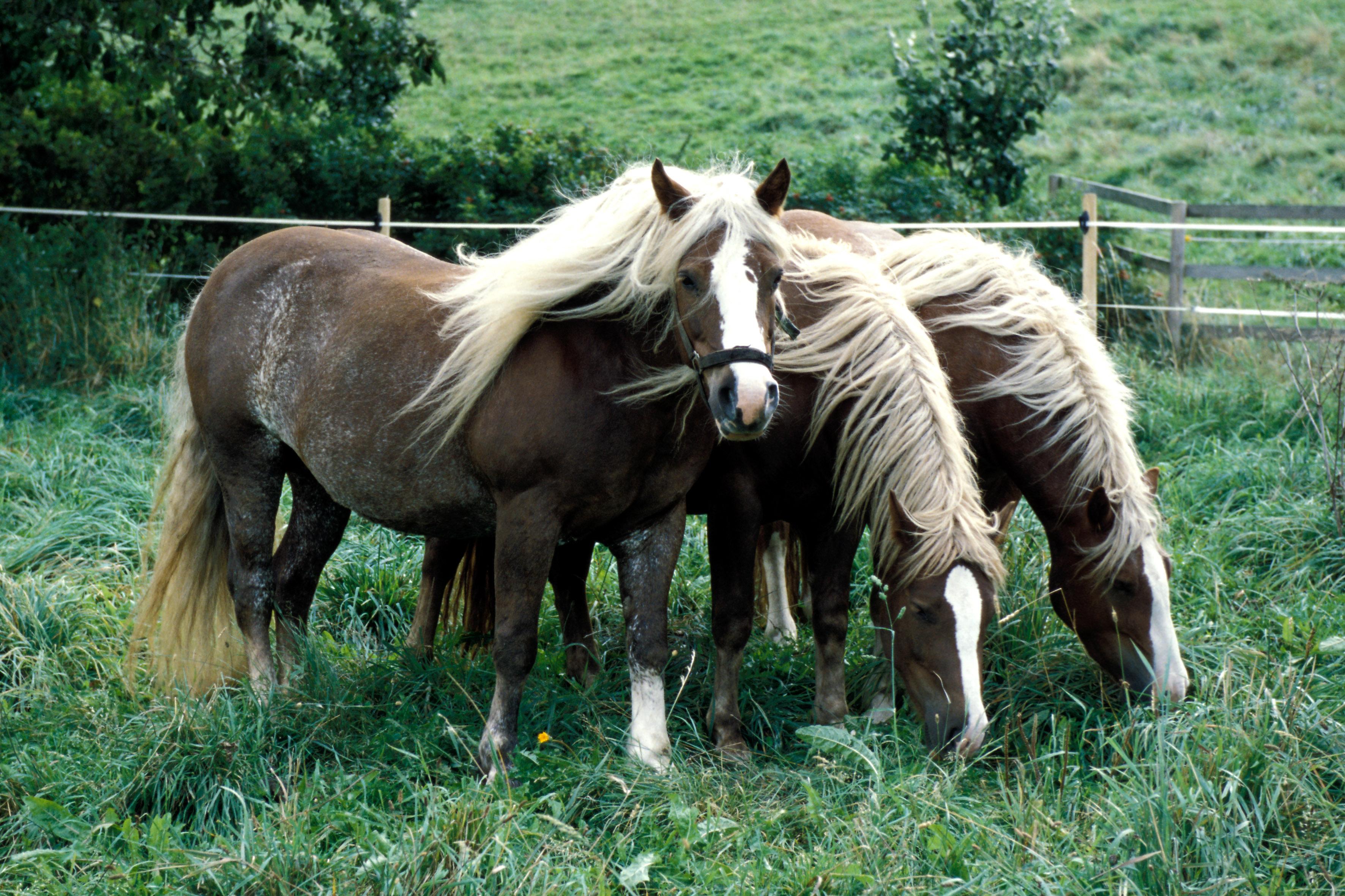 pferdenamen mit f stuten