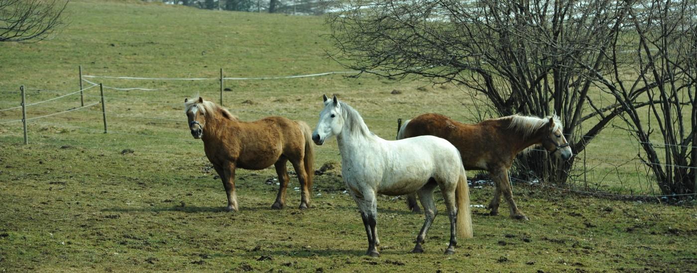 Rosana und ihre Weidekollegen beim Anweiden dieses Frühjahr
