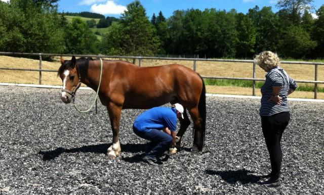 Dehnübungen für Pferde