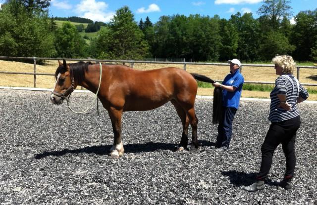 Dehnübungen am Pferd