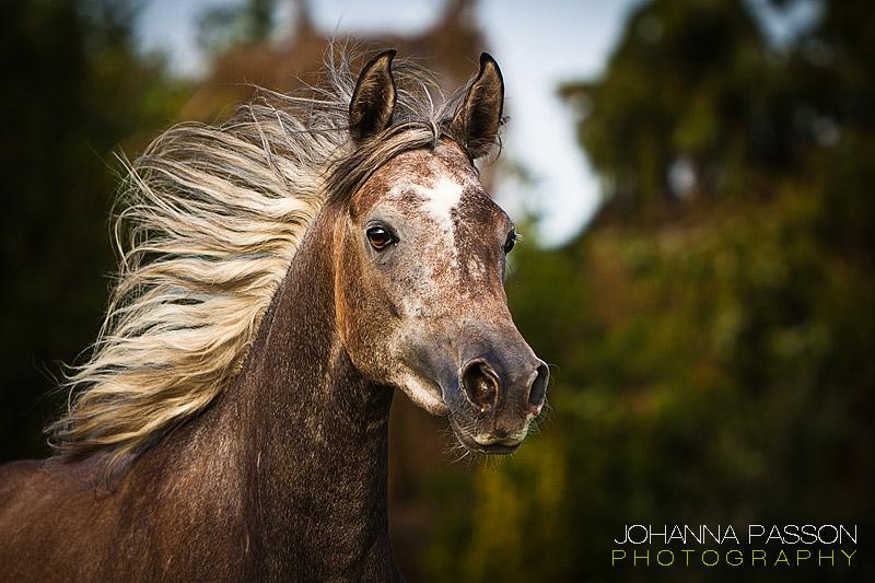 Interview mit der Pferdefotografin Johanna Passon