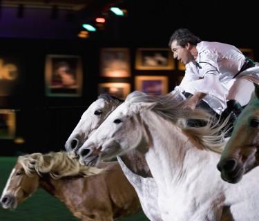Jean Francois Pignon auf der Messe Pferd &