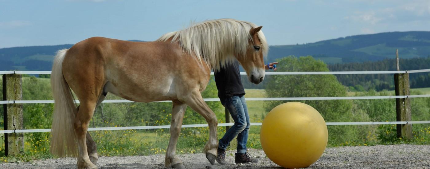Fußballspielen mit dem Pferd