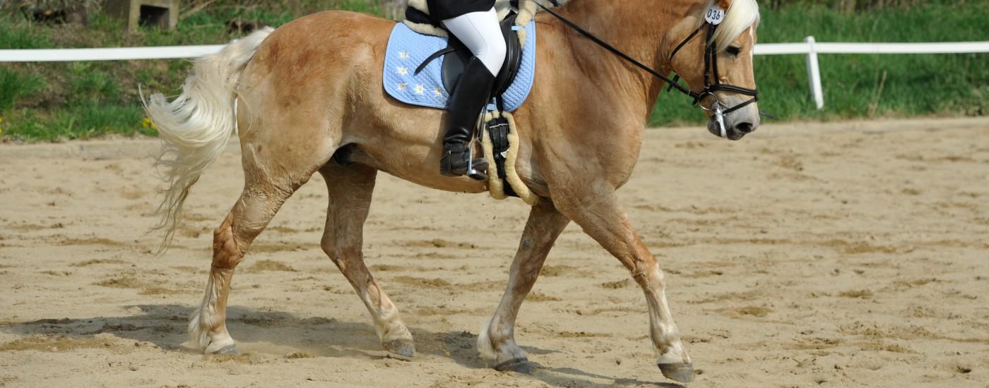 pferd in anlehnung reiten
