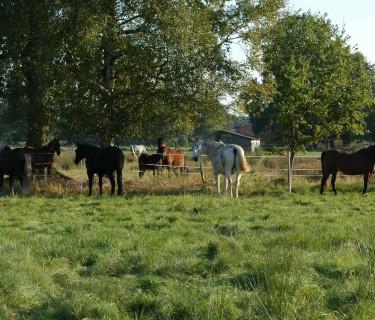 Gruppenhaltung funktioniert nur, wenn die Pferde genügend Platz haben.
