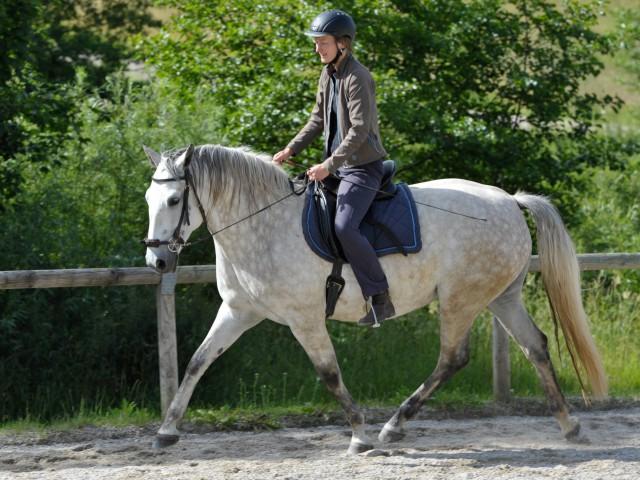 Hier scheint das Pferd locker: Ein Foto aus der Zeit, als ich Rosana noch ausschließlich gebisslos ritt