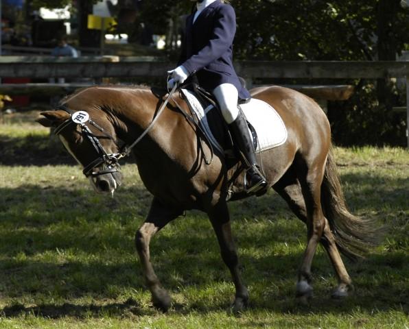 """""""Hauptsache Rübe runter"""" -  viele Reiter reigelen ihrem Pferd den Kopf herunter, in dem Irrglauben, dass es dann auch """"gut laufen"""" würde."""